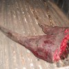 Rhino horn 'syndicate head' attacks journo