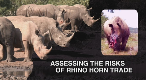 The Risks of Legal Trade in Rhino Horn