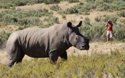 Plan B Needed To Save Rhinos By Paul Hoffman  September 02